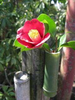 Himuro Camellia Garden, Chigasaki (Photo by M)