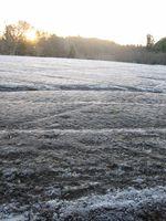 Frosty field (Photo: M)