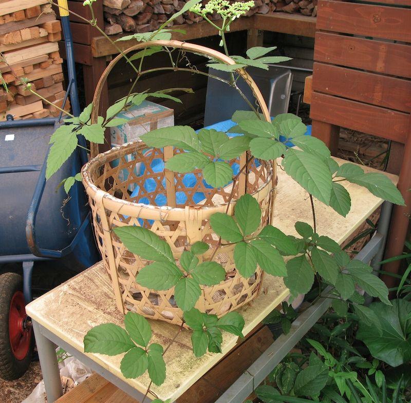Vine and basket copy