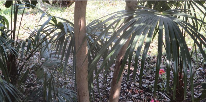 Palm fronds sunshine
