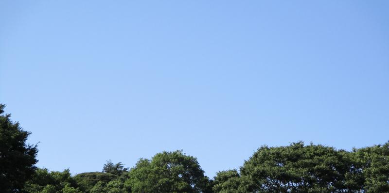 Blue sky summer