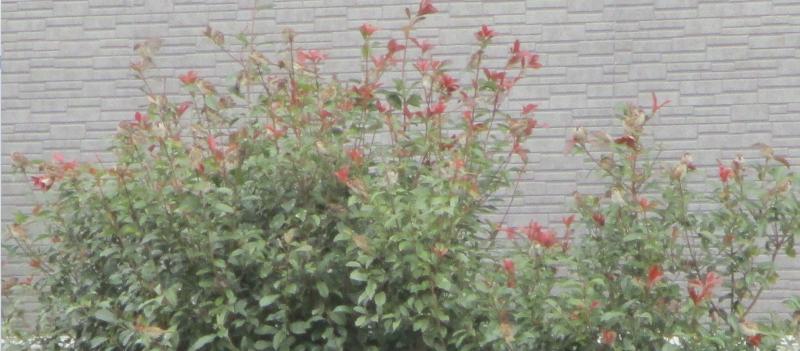 Sparrows in a tree
