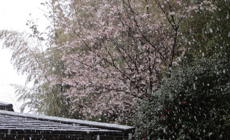 Cherry and snow