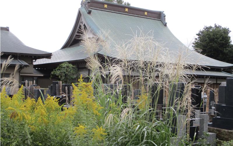 Goldenrod & pampas grass