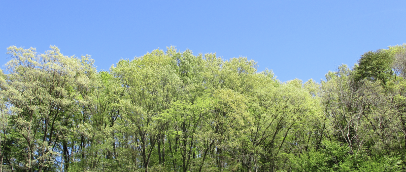 Spring green and blue