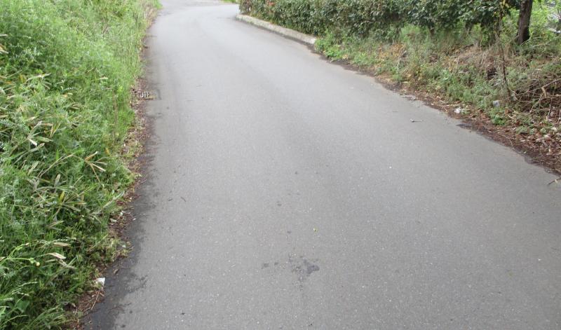 Roadkill stain