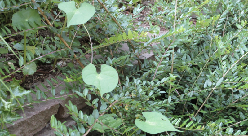 Weeds visibly