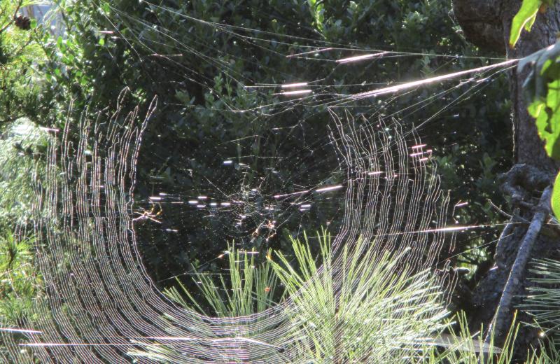 Spiders repair