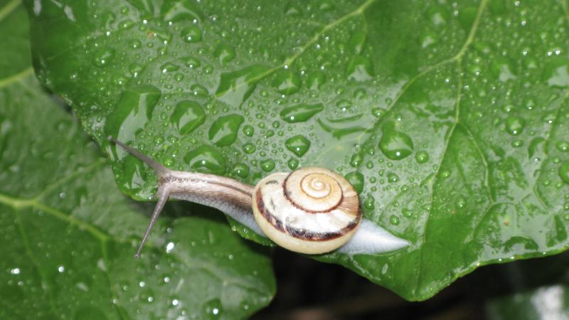 Stare movement snail #1