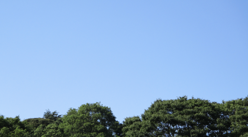 Suddenly blue sky summer